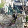 会下山公園の桜は、まだのようです。猫もどんな様子か桜を見にきてました。