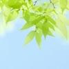 【季節のコーディネート】新緑の5月