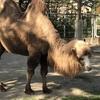 八木山動物園で、超可愛いフレンズたちに会ってきた!【後編】