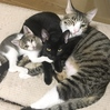 元ノラ子猫【ちゃみ】先住猫たちと合流!そして我が家で生活することに!