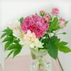 リビングのお花を撮るのは難しい!(チューベローズとカーネーションの写真)