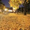 大阪城公園の黄色いじゅうたん