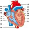 大動脈解離からの復活