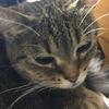 昨日は体調の悪さがピークでした。猫ちゃん、怒っています。