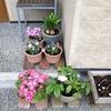 玄関に花を並べて・・ガーデニングの楽しい季節がやってきました^^