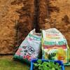 栗カボチャの土の準備!そら豆と新玉ねぎのドリア!