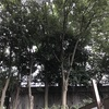 大阪城野外音楽堂の外でスタレビを聴く