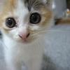 猫と娘と猫と【すももの話】