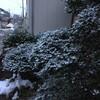 新潟にまた雪が降りだす