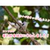 バードウォッチング初心者)ストアカの野鳥講座に行ってきました@都内