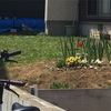 庭の草刈り頻度アップ-無心になれる作業に癒されつつも早くも見えてきた限界