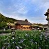 宮地嶽神社 境内の花菖蒲