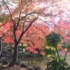 日比谷公園の紅葉2017