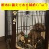 『愛犬たちも台風に備える(;^ω^)』