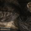 注射にびびる猫