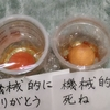 ⑥【51日目】終了~卵を使った言霊実験
