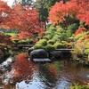 京都は宇治市「三室戸寺」西国十番札所 紅葉 2020