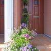 夏の玄関を彩る。ジュピウォールと寄せ植えのその後