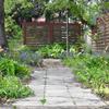 師匠のお庭とエディブルフラワー