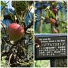 秋ですね🍎🍏🍑🍇りんご収穫体験ができます🍎🍎