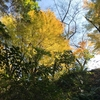 九州自然歩道ツアー