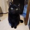 黒猫の一日一幸