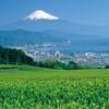ネット注文の印鑑が静岡市でも激安です