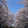 春、三月!