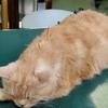 猫の鍼灸治療!効果や注意事項は?