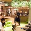 【匂い無し・清潔・低価格で癒し体験】ねこカフェ「MOCHA(モカ)」