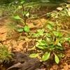 【Biotop】メダカ飼いを始めて10ヶ月、環境改善のテコ入れをしてみます