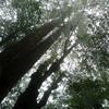 屋久島へ行ってきました 白谷雲水峡