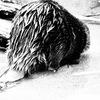 名古屋「東山動物園」にレッサーパンダ4匹展示計画