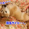 ぽつんと1テント Ver.2(NDA編) 2