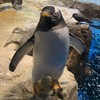 ペンギンとフグの水族館~海響館~