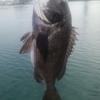 清水 三保 紀州釣り 絶好調