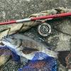 【遠征】念願のヘチ釣りでウキウキ フィッシング