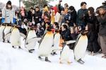 雪の中で懸命に生きる動物たち。旭山動物園に行ってきました!