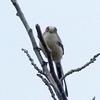 OLYMPUS OM−D E−M1 試写 野鳥(エナガ・コゲラ)