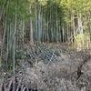 冬に伐採した竹の始末と竹藪への道路工事 ーその1ー