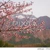 里山の春 桜