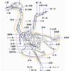ケン〇ッキーフライドチキンで解剖(骨学)・鳥の骨の学習