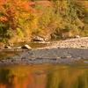色づく川にて