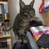 授業で使えるかも?:Google検索から3Dの動物をARで登場させる