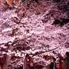 桜の咲くころ  カメラと散歩
