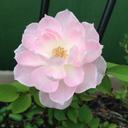 hidamari花のノート