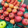 りんご中毒
