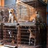 犬猫引き取り業者、書類送検へ 劣悪環境で飼育した疑い