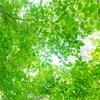 6/23 夏の陰ヨガ 開催します☘