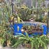 ウツボカズラがいっぱい!食虫植物が見れる大阪の植物園『咲くやこの花館』